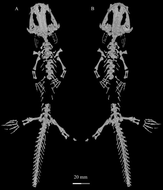 Dataset of 3D high-resolution μCT scan of fossil specimens
